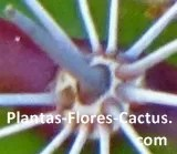 parts of the cactus