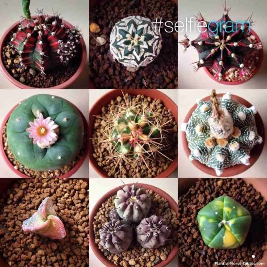 fertilizar cactus