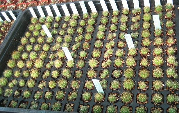 negocios rentables con cactus