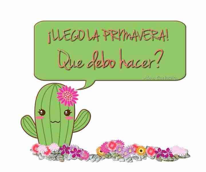 Llega la primavera, y los cactus necesitan cuidados 4