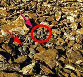 5 Secretos de los Cactus Piedras Vivas Lithops 1
