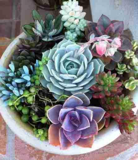 3 Ideas rápidas para aprovechar las vacaciones y que tus cactus están mas lindos. 4