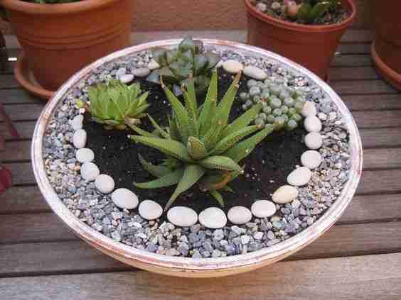 3 Ideas rápidas para aprovechar las vacaciones y que tus cactus están mas lindos. 9