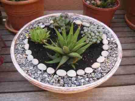 3 Ideas rápidas para aprovechar las vacaciones y que tus cactus están mas lindos. 6