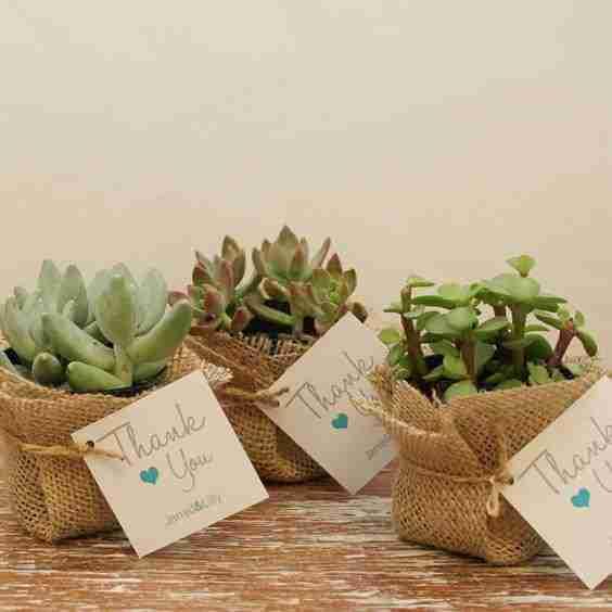 hacer souvenirs cactus y suculentas