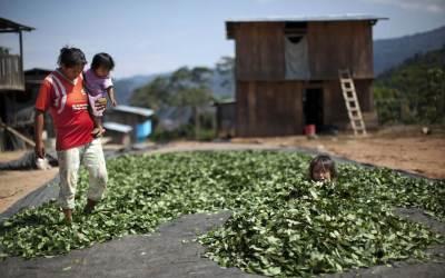 Desarrollo con coca: Una utopía posible