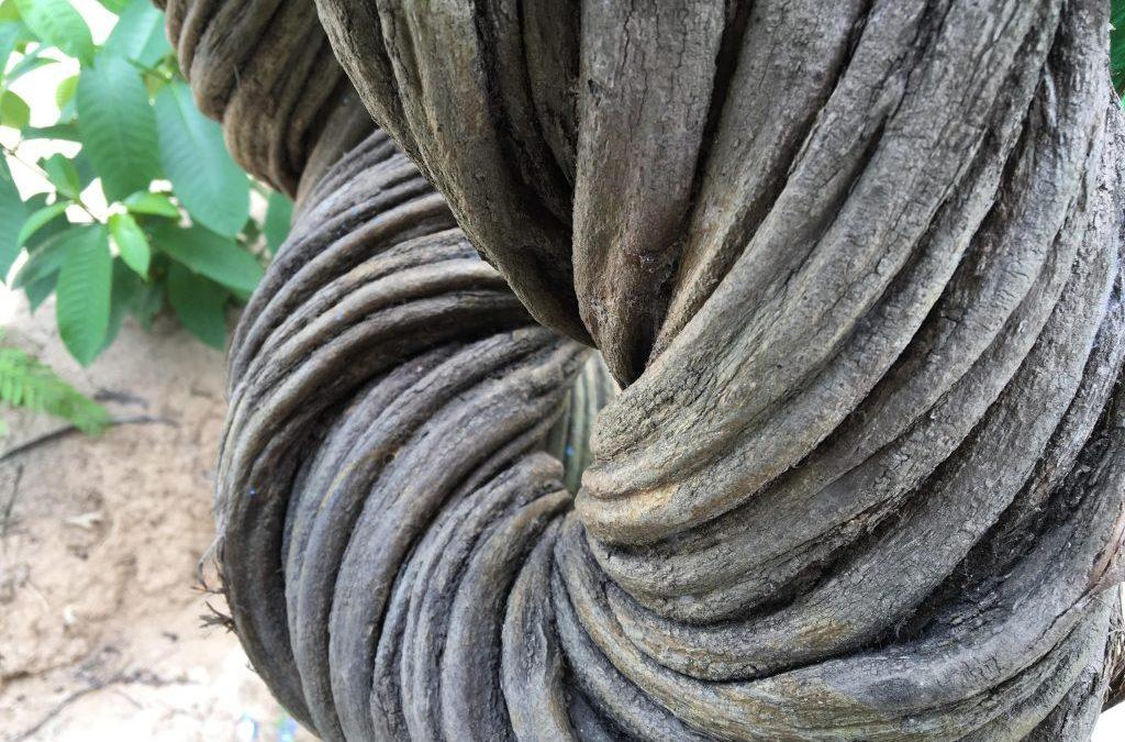 El potencial psicoterapéutico de la ayahuasca en el renacimiento de la ciencia psicodélica