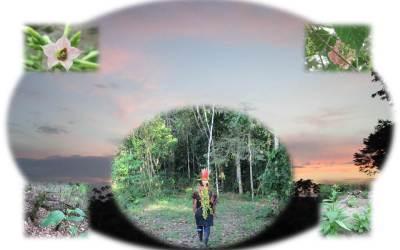 Plantas Sagradas y Ritualidad Indígena en los Procesos de Resistencia en Zonas de Guerra en Colombia