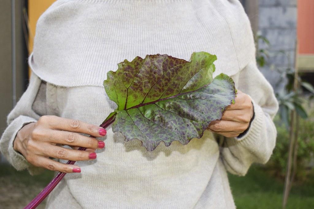 Health Benefits of Beet Leaves (1)
