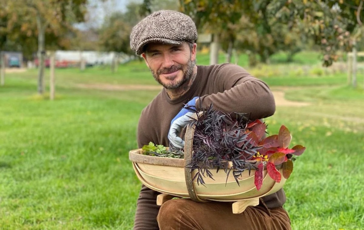 David Beckham vegan