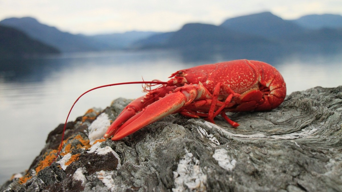 'World's First' lab-grown lobster meat unveiled in Asia