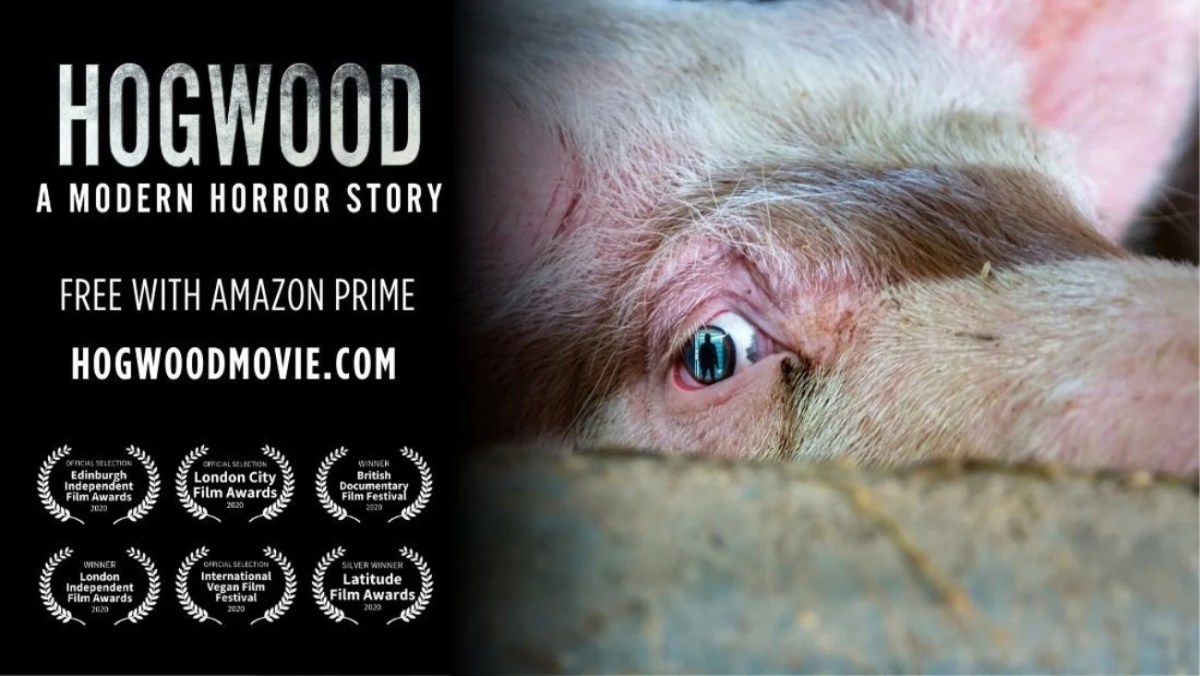 hogwood documentary