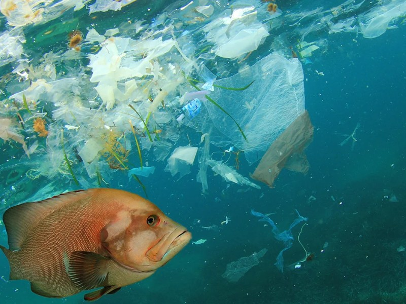 Microplastics in the ocean