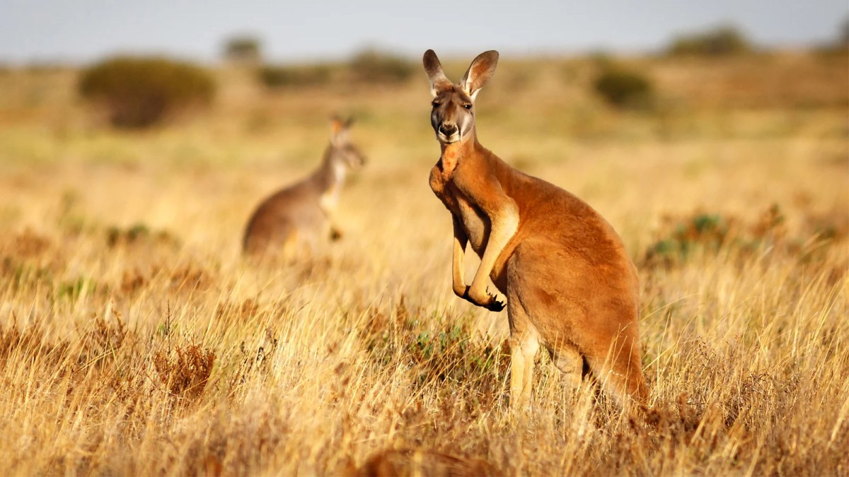 Hollywood Stars Release Film Urging Nike To Ditch Kangaroo Leather