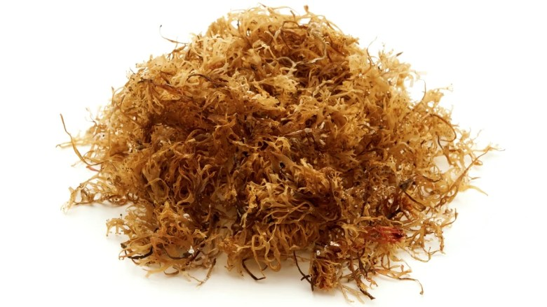 The health benefits of Irish Sea Moss are endless. It is rich in vitamins, minerals and protein and has been labelled a vegan superfood, capable of increasing libido, energy and mood.