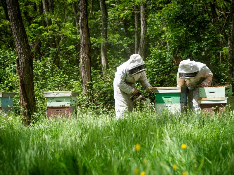 Marks and Spencer faced criticism over its plan to instate millions of honey bees on farms across the UK to 'boost pollination'