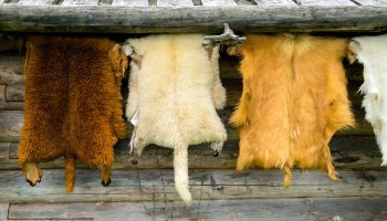 A bill seeking to end fur trade in Britain had its first hearing in parliament today