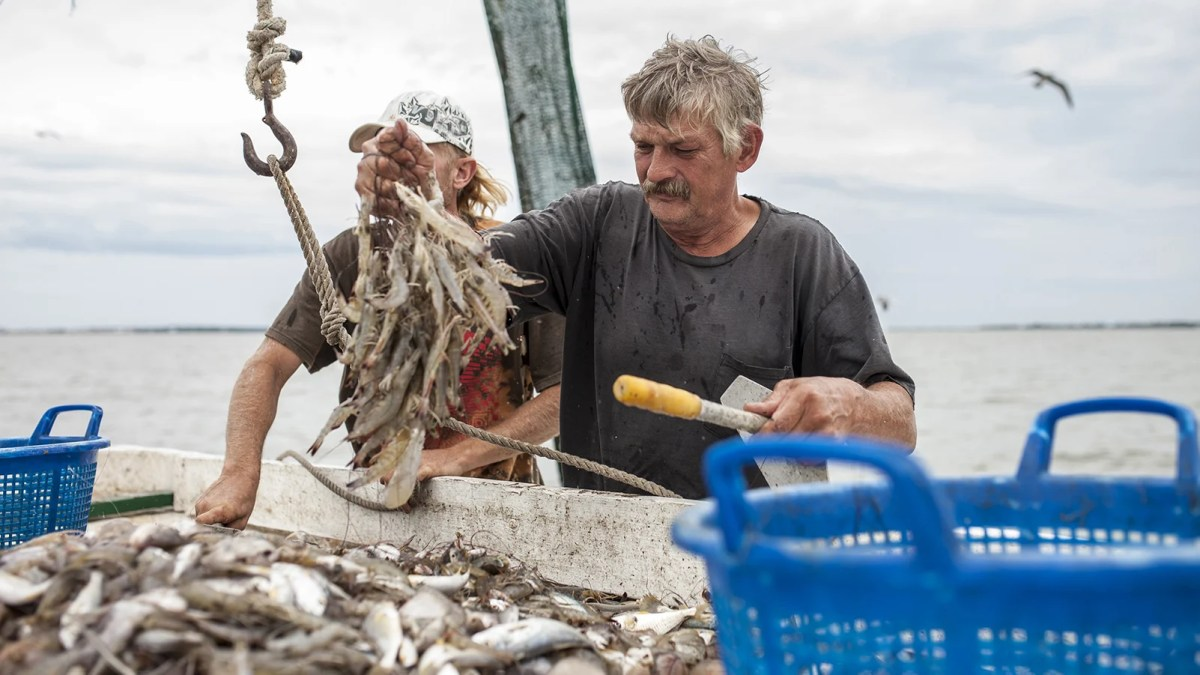 Will The Oceans Be Empty By 2048? Seaspiracy Responds