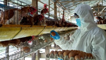 People Fail To Recognize Factory Farming's Link To Zoonotic Diseases