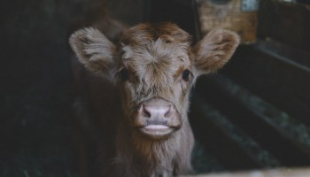 Beyond Cruelty Urges United Nations to Add Zero Animal Exploitation to its Sustainable Development Goals