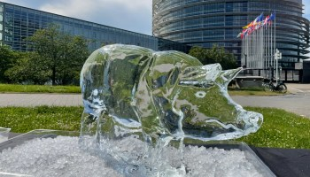 Animal Ice Sculptures Left Melting Outside European Parliament To Link Animal Ag And Climate Crisis