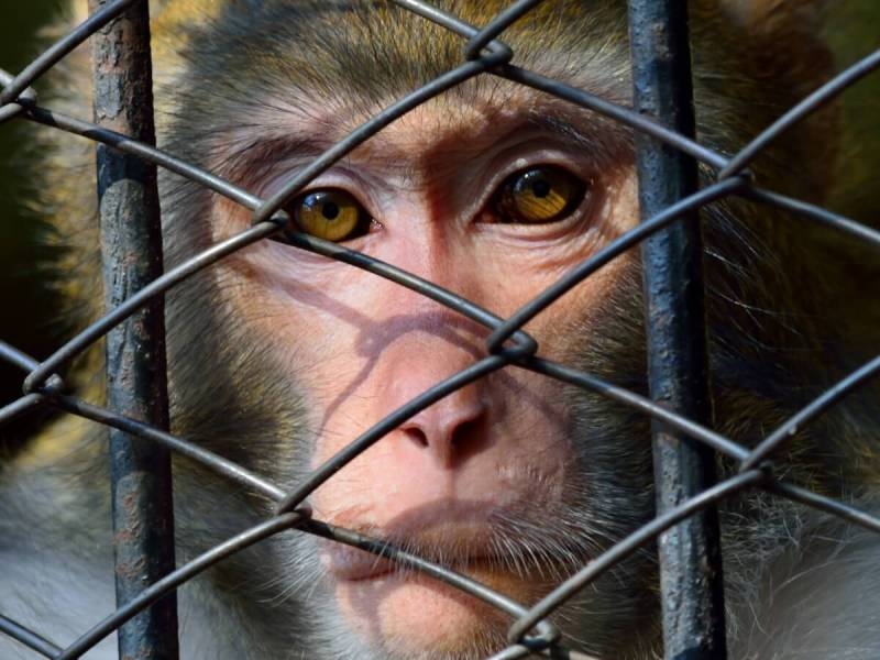 Wildlife Trade Increases The Risk Of Next Global Pandemic, Study Finds