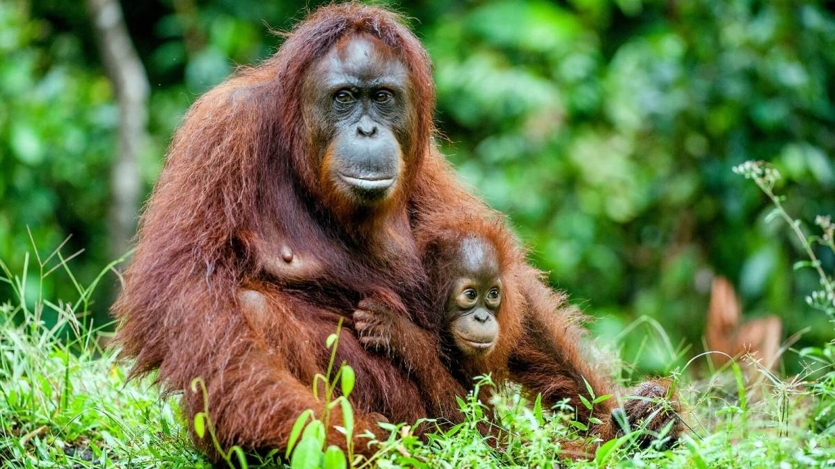 What Is Palm Oil And Is It Sustainable?