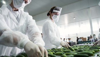 Global worker shortages are transforming the food industry, due to Brexit and COVID-19