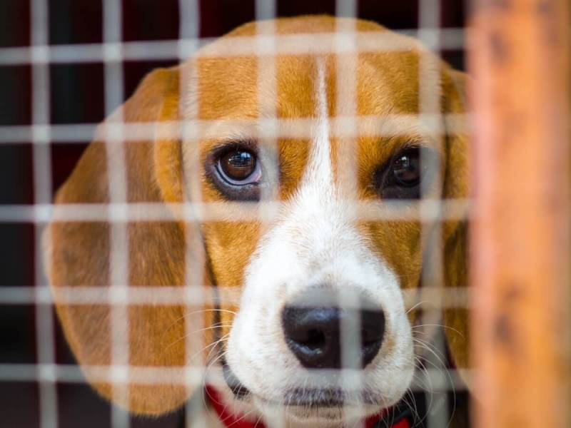 Lab Animals Should Be Rescued, Not Euthanized After Experiments, New Bill Urges