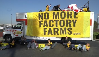 Protesters Block Slaughterhouse Which Supplies Poultry To Amazon And Chick-fil-A