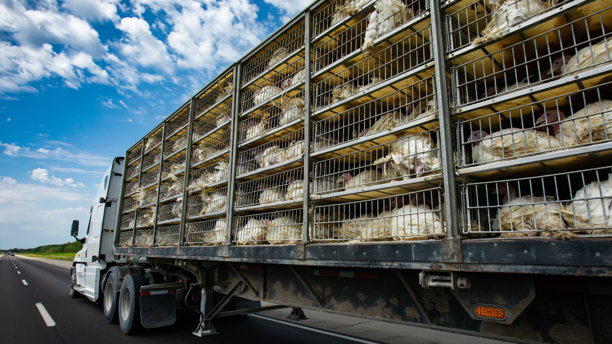 CO2 shortages meat industry links