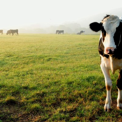 China bans beef imports following mad cow disease