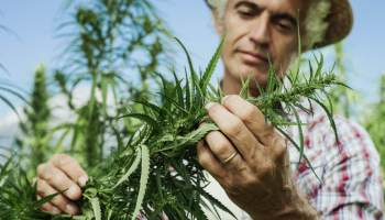 Texan Farm Transitions From Farming Chickens To Growing Hemp
