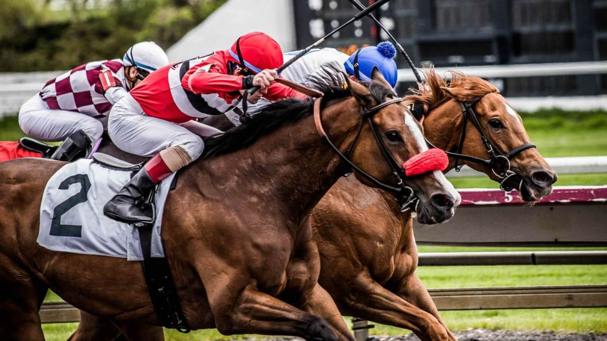 Australian Horse Racing Organization Faces Criminal Charges Over Animal Cruelty Allegations