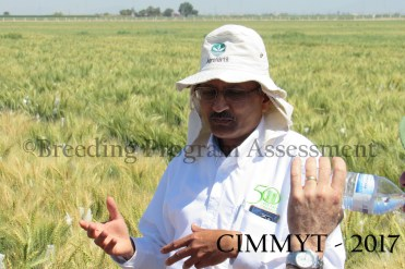 Dr Ravi Singh - CIMMYT distinguished scientist and Head Wheat breeder
