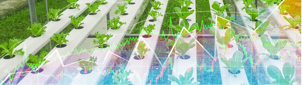 Agricultural product, Organic Lettuce and light in morning, on closed farm system Non-toxic, stock graph screen showing stock trading
