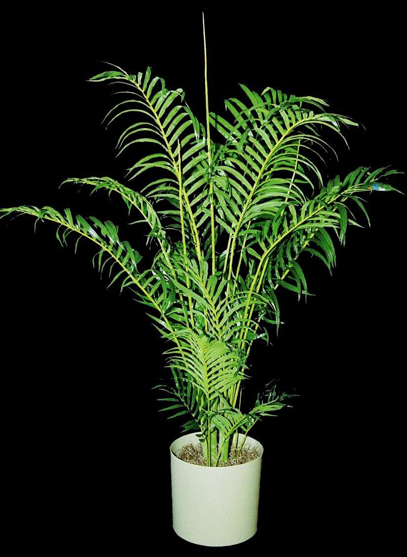Artificial Plants Plant Care Inc