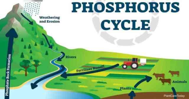 phosphorus cycle