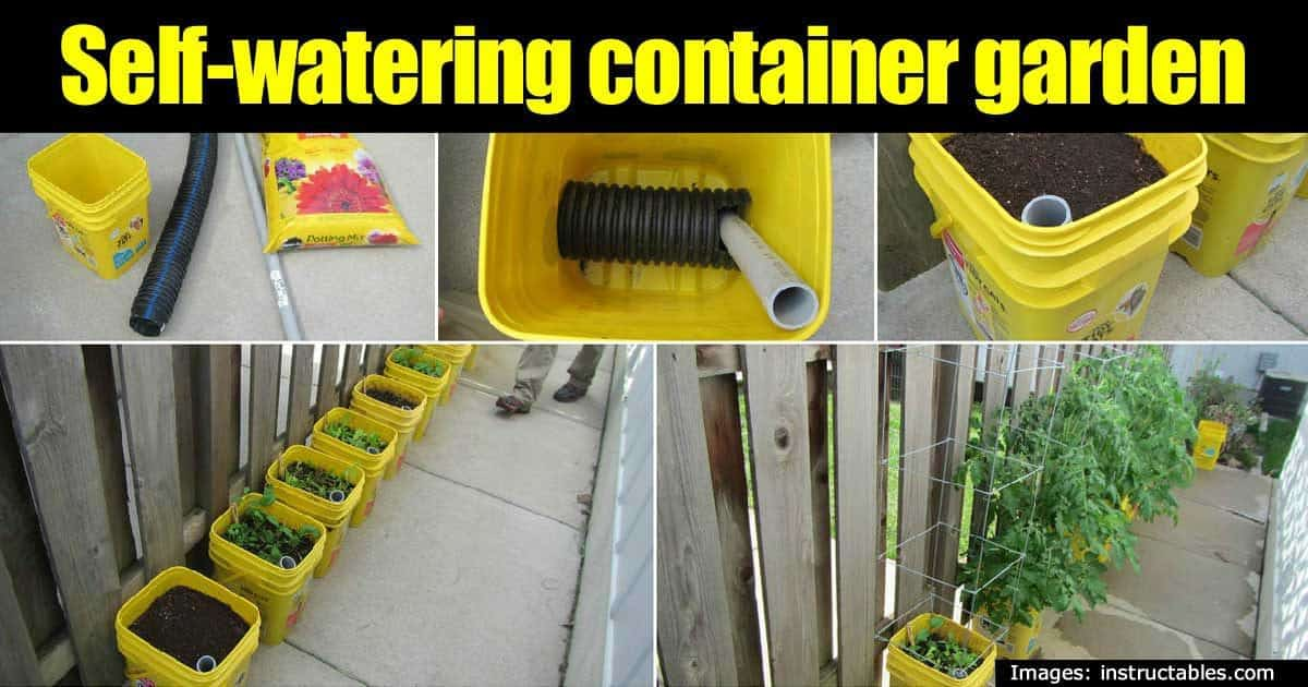 Making A Self Watering Container Garden Maximize