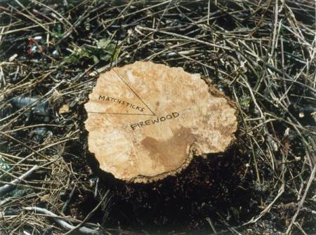 Stump (1999)