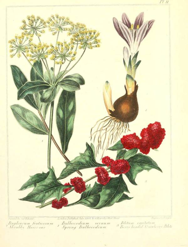 Botanical Artworks