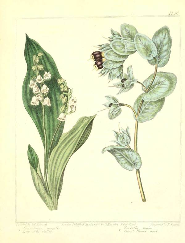 Vintage Retro Botanical Art