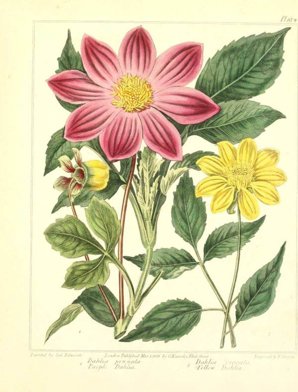 Free Vintage Retro Botanical Art