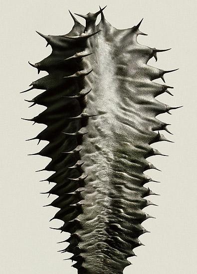 Peterlippman Cacti