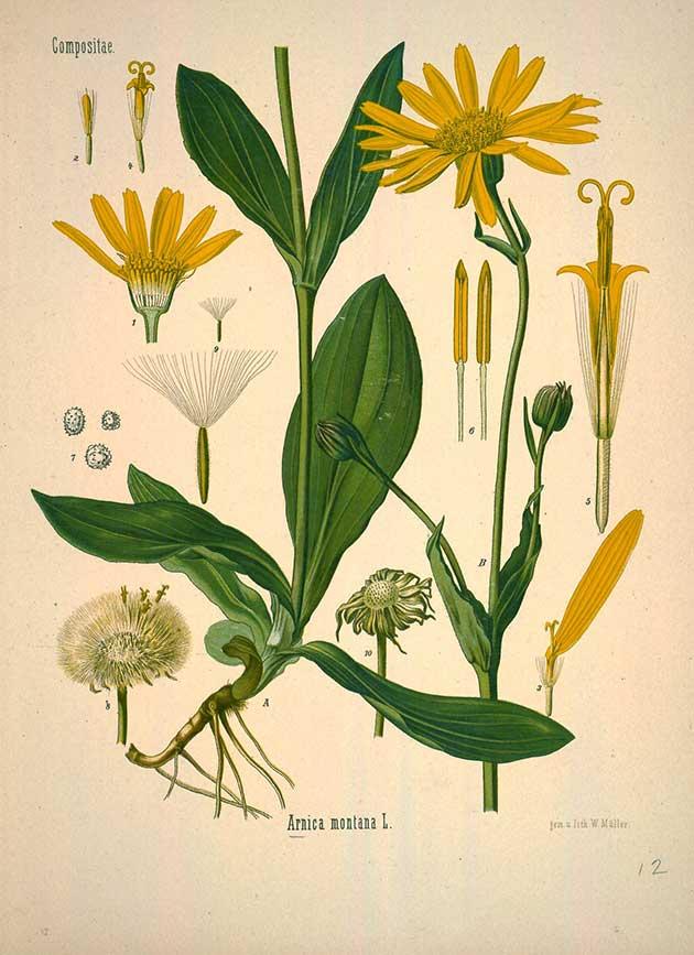 Medicinal Botanical Plants