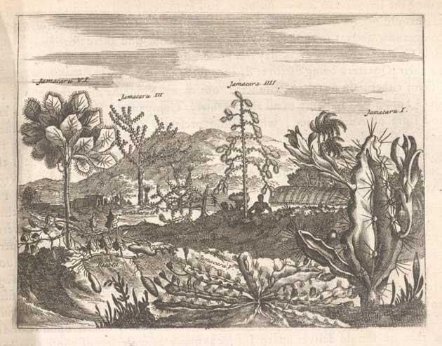 Americas plants illustration