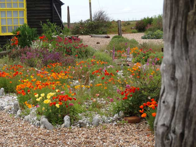Dungeness plants and art