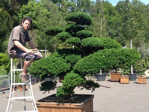 Tom with topiary