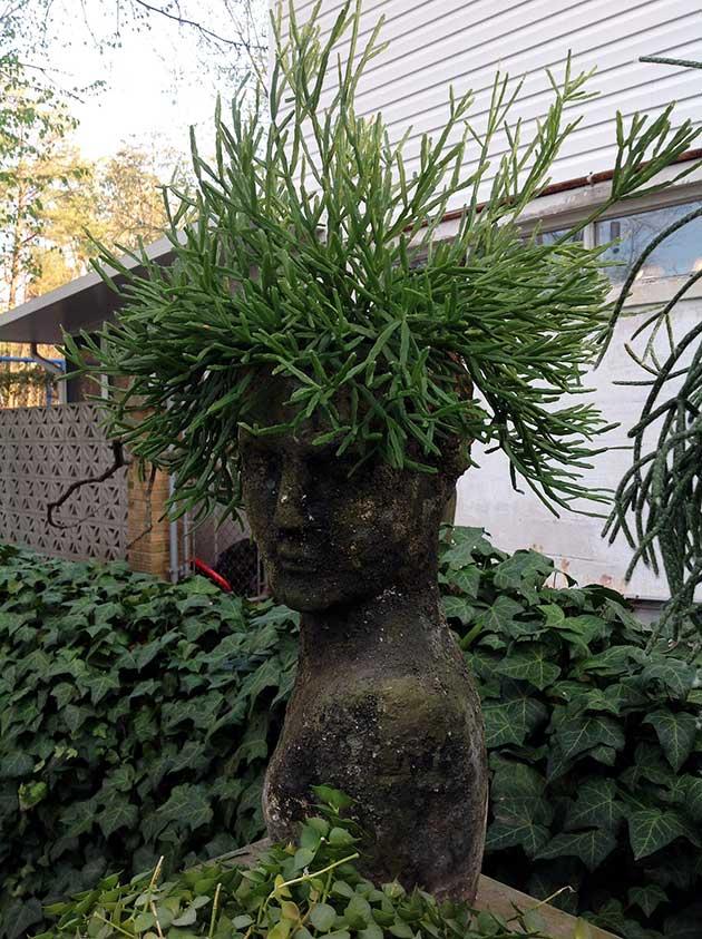 Botanical plant and art photography