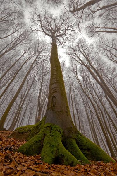 magic tree photographs